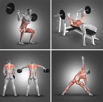 人体锻炼时发力的肌肉部位透视图